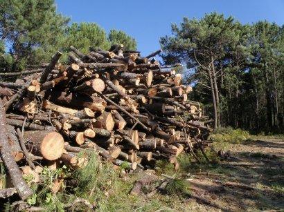 El monte genera empleo y servicios, y la biomasa, superávit