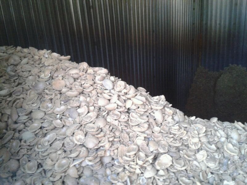 Cáscara de almendra para biomasa